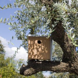 Birdhouse - 371