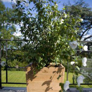 Planter TRAD 50_50-285